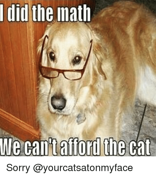 I Did the Math We Can't Afford the Cat Sorry | Cats Meme ...