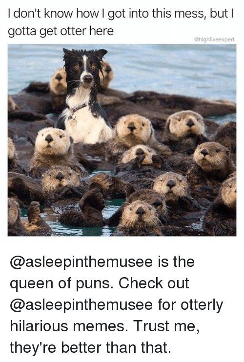 Memes, Puns, and Queen: I don't know how I got into this mess, but I  gotta get otter here  @highfiveexpert @asleepinthemusee is the queen of puns. Check out @asleepinthemusee for otterly hilarious memes. Trust me, they're better than that.