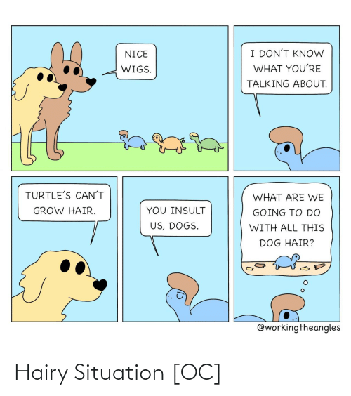 insult: I DON'T KNOW  NICE  WHAT YOU'RE  WIGS.  TALKING ABOUT.  TURTLE'S CAN'T  WHAT ARE WE  YOU INSULT  GROW HAIR.  GOING TO DO  US, DOGS.  WITH ALL THIS  DOG HAIR?  @workingtheangles Hairy Situation [OC]