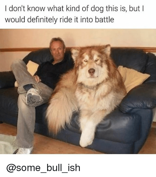 Definitely, Dank Memes, and Dog: I don't know what kind of dog this is, but l  would definitely ride it into battle @some_bull_ish