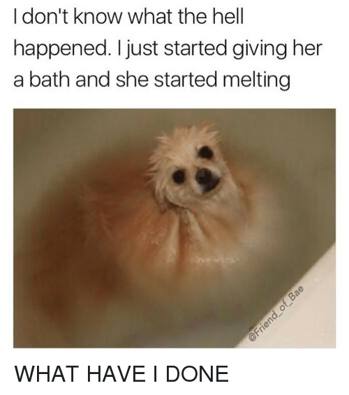25+ Best Memes About What Have I Done | What Have I Done Memes