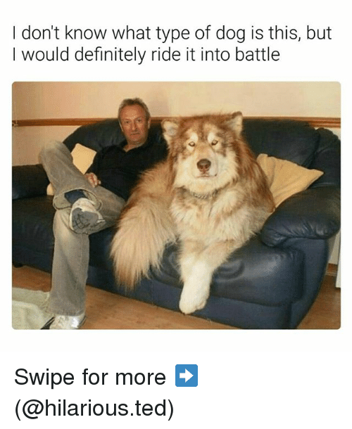 Definitely, Funny, and Ted: I don't know what type of dog is this, but  I would definitely ride it into battle Swipe for more ➡ (@hilarious.ted)