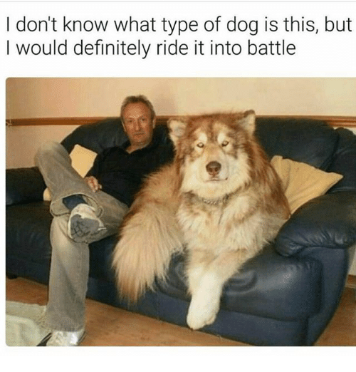 ride it: I don't know what type of dog is this, but  I would definitely ride it into battle