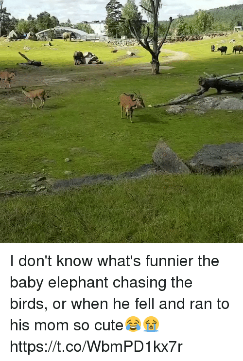 Baby Elephant: I don't know what's funnier the baby elephant chasing the birds, or when he fell and ran to his mom so cute😂😭 https://t.co/WbmPD1kx7r