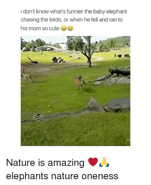 Baby Elephant: i don't know what's funnier the baby elephant  chasing the birds, or when he fell and ran to  his mom so cute Nature is amazing ❤️🙏 elephants nature oneness