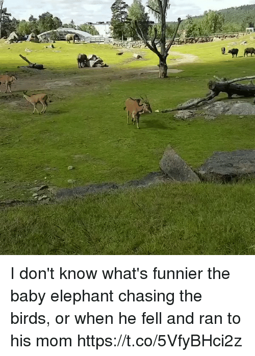 Birds, Elephant, and Girl Memes: I don't know what's funnier the baby elephant chasing the birds, or when he fell and ran to his mom https://t.co/5VfyBHci2z