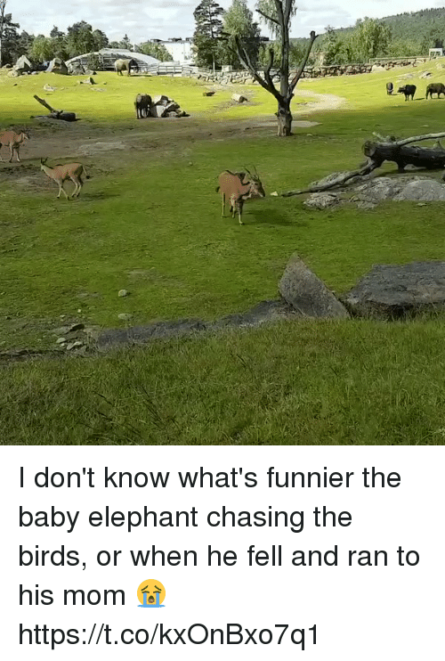 Baby Elephant: I don't know what's funnier the baby elephant chasing the birds, or when he fell and ran to his mom 😭 https://t.co/kxOnBxo7q1