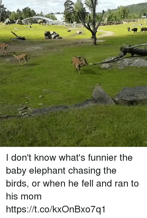 Birds, Elephant, and Girl Memes: I don't know what's funnier the baby elephant chasing the birds, or when he fell and ran to his mom https://t.co/kxOnBxo7q1