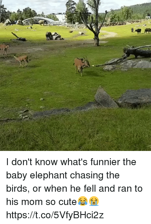 Baby Elephant: I don't know what's funnier the baby elephant chasing the birds, or when he fell and ran to his mom so cute😂😭 https://t.co/5VfyBHci2z