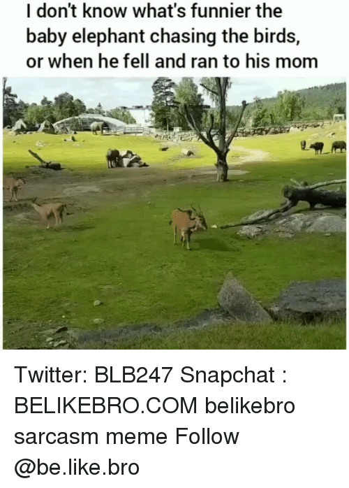 Baby Elephant: I don't know what's funnier the  baby elephant chasing the birds,  or when he fell and ran to his mom Twitter: BLB247 Snapchat : BELIKEBRO.COM belikebro sarcasm meme Follow @be.like.bro