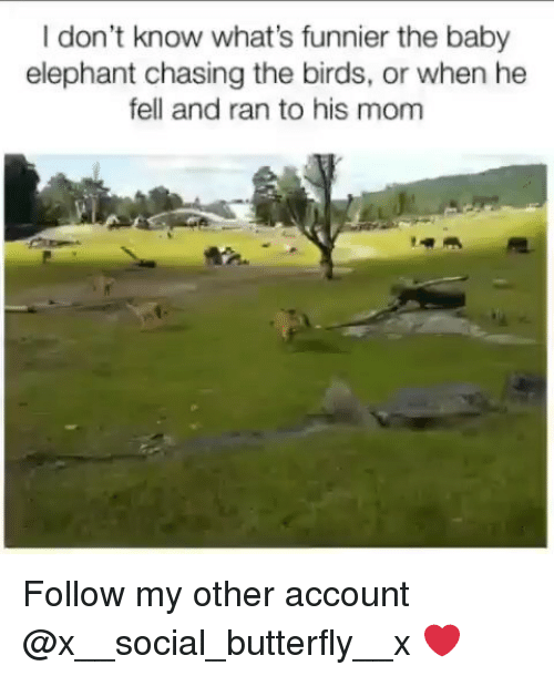 Baby Elephant: I don't know what's funnier the baby  elephant chasing the birds, or when he  fell and ran to his mom Follow my other account @x__social_butterfly__x ❤