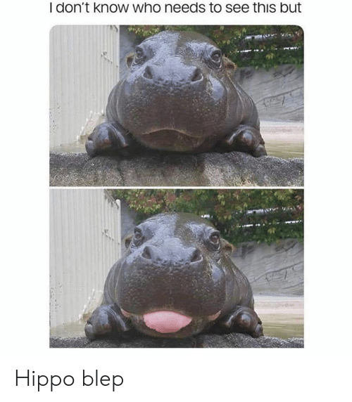 Blep: I don't know who needs to see this but Hippo blep