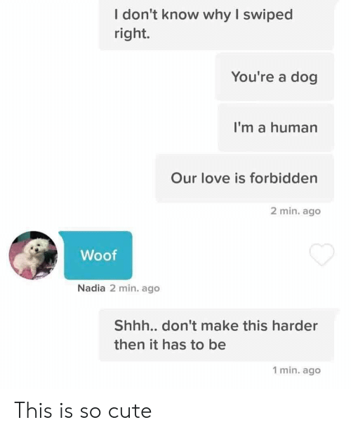 woof: I don't know why I swiped  right.  You're a dog  I'm a human  Our love is forbidden  2 min. ago  Woof  Nadia 2 min. ago  Shh... don't make this harder  then it has to be  1 min. ago This is so cute