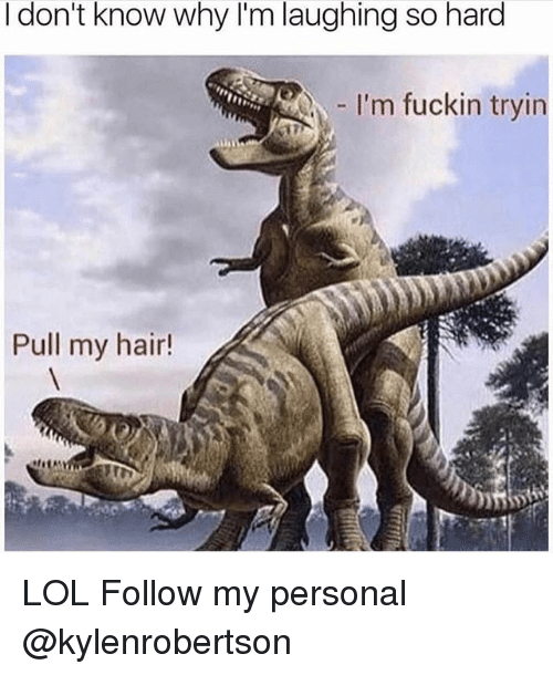 Lol, Memes, and Hair: I don't know why I'm laughing so hard  I'm fuckin tryin  Pull my hair! LOL Follow my personal @kylenrobertson