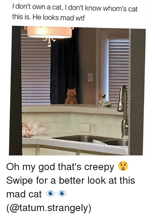 Better Look: I don't own a cat, l don't know whom's cat  this is. He looks mad wtf  Tatum. Streng Oh my god that's creepy 😲Swipe for a better look at this mad cat 👁️👁️ (@tatum.strangely)