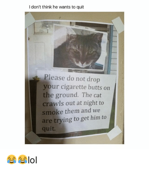 Cats, Memes, and Cigarette: I don't think he wants to quit  Please do not drop  your cigarette butts on  the ground. The cat  crawls out at night to  smoke them and we  are trying to get him to  quit. 😂😂lol
