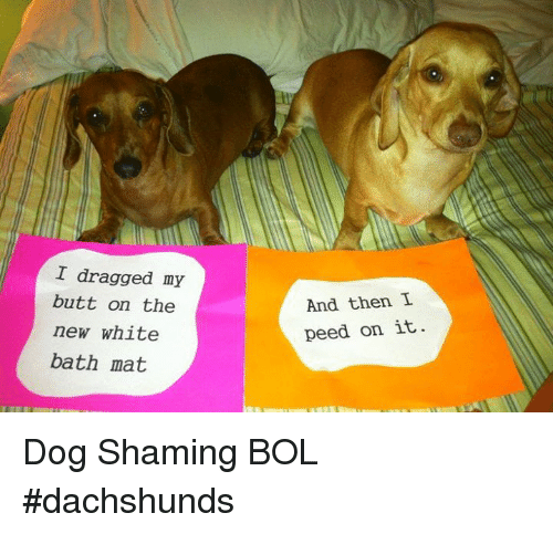 My Dog Peed On My New Rug: 25+ Best Memes About Dog Shaming
