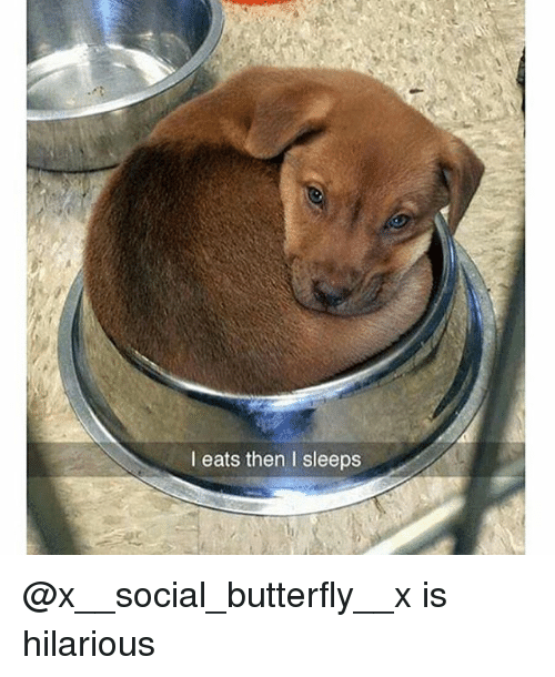Funny, Butterfly, and Hilarious: I eats then I sleeps @x__social_butterfly__x is hilarious