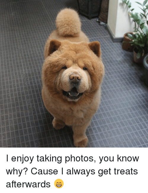 Memes, 🤖, and Photos: I enjoy taking photos, you know why? Cause I always get treats afterwards 😁