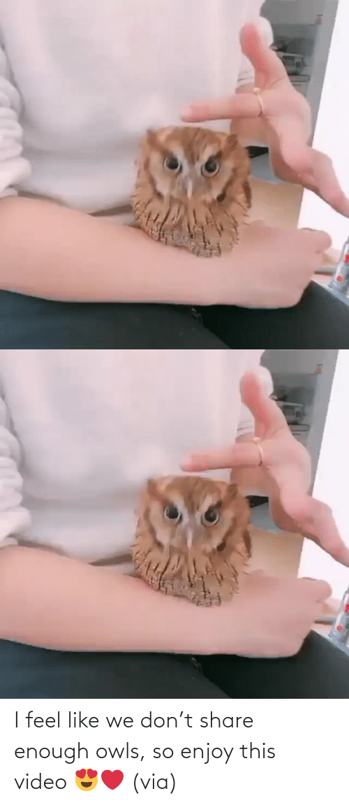 I Feel: I feel like we don't share enough owls, so enjoy this video 😍❤️ (via)