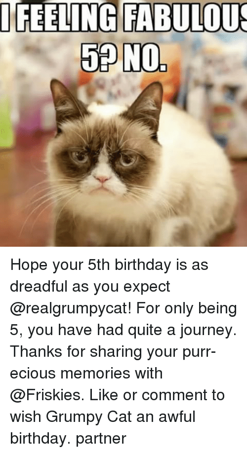 Birthday, Journey, and Memes: I FEELING FABULOUS  58 N0, Hope your 5th birthday is as dreadful as you expect @realgrumpycat! For only being 5, you have had quite a journey. Thanks for sharing your purr-ecious memories with @Friskies. Like or comment to wish Grumpy Cat an awful birthday. partner