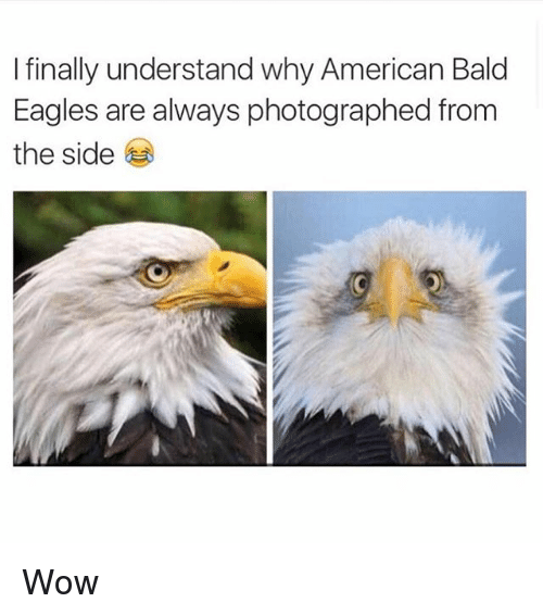 Finals, American, and Eagle: I finally understand why American Bald  Eagles are always photographed from  the side Wow