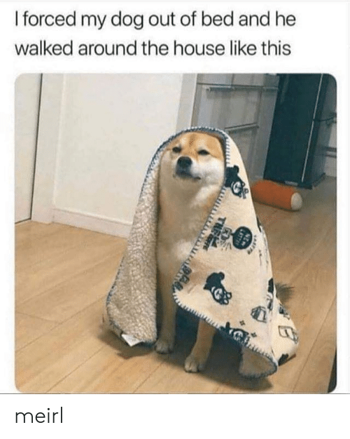 Out Of Bed: I forced my dog out of bed and he  walked around the house like this  NEW  LATT  THE meirl