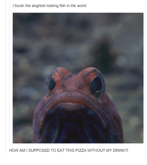 Angriest: i foudn the angriest looking fish in the world  HOW AM I SUPPOSED TO EAT THIS PIZZA WITHOUT MY DRINK?!