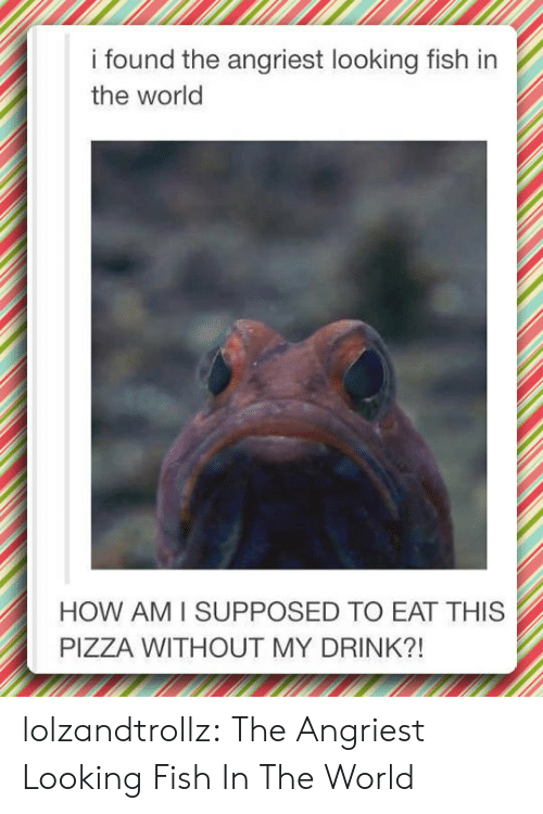 Angriest: i found the angriest looking fish in  the world  HOW AM I SUPPOSED TO EAT THIS  PIZZA WITHOUT MY DRINK?! lolzandtrollz:  The Angriest Looking Fish In The World