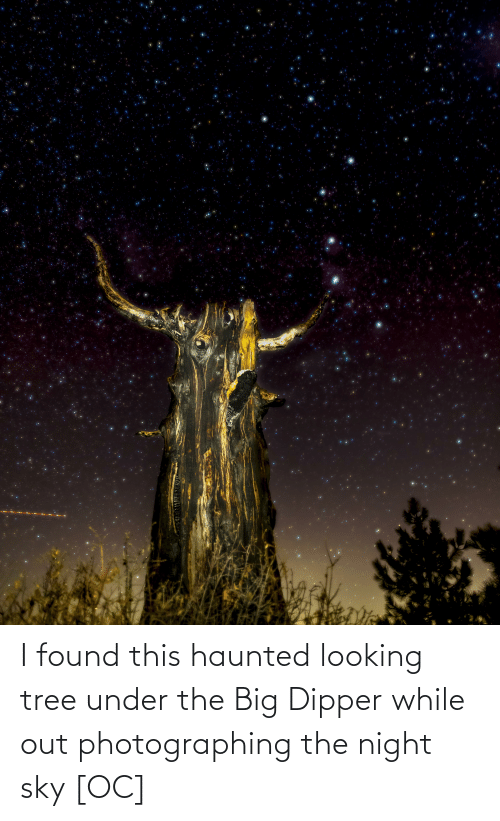 dipper: I found this haunted looking tree under the Big Dipper while out photographing the night sky [OC]
