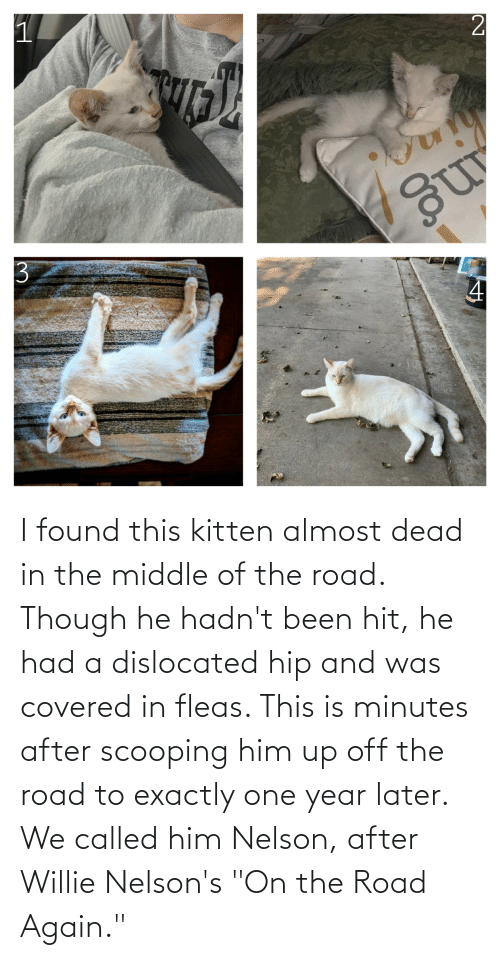 """willie: I found this kitten almost dead in the middle of the road. Though he hadn't been hit, he had a dislocated hip and was covered in fleas. This is minutes after scooping him up off the road to exactly one year later. We called him Nelson, after Willie Nelson's """"On the Road Again."""""""