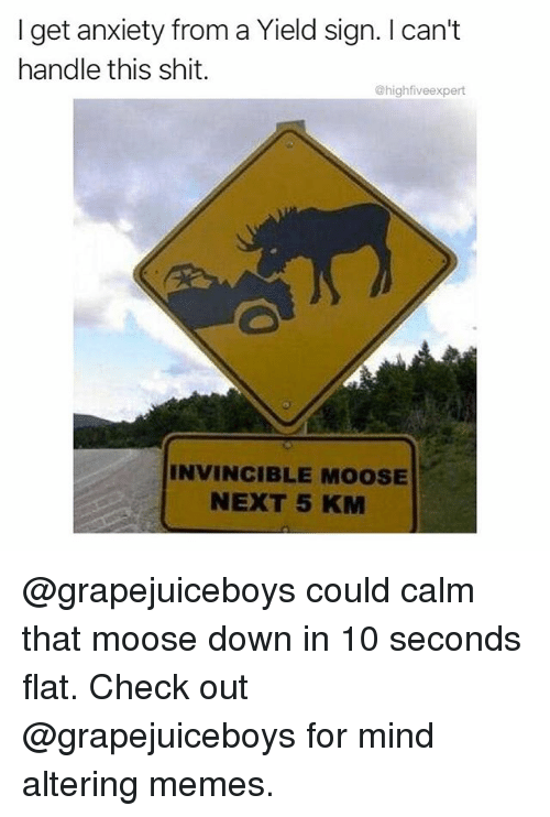 Cant Handle This: I get anxiety from a Yield sign. I can't  handle this shit.  @highfiveexpert  INVINCIBLE MOOSE  NEXT 5 KM @grapejuiceboys could calm that moose down in 10 seconds flat. Check out @grapejuiceboys for mind altering memes.