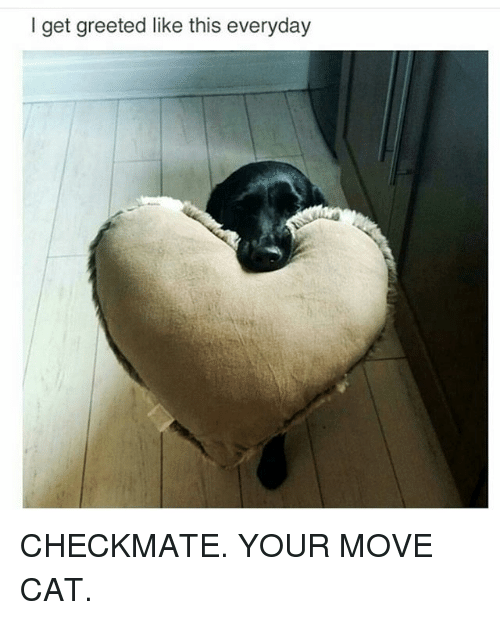 Memes, 🤖, and Cat: I get greeted like this everyday CHECKMATE. YOUR MOVE CAT.