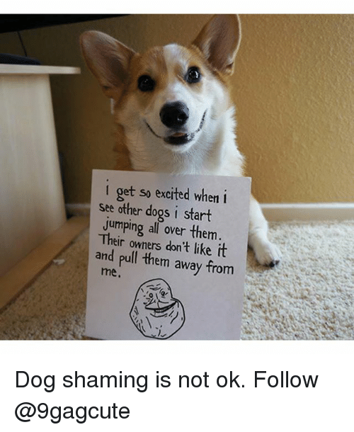 Dogs, Memes, and 🤖: i get so excited when i  see other dogs i start  jumping all over them  Their owners don't like it  and pull them away from  me. Dog shaming is not ok. Follow @9gagcute