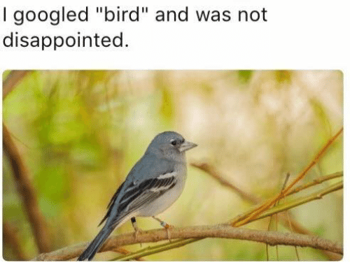 """disappoint: I googled """"bird"""" and was not  disappointed."""