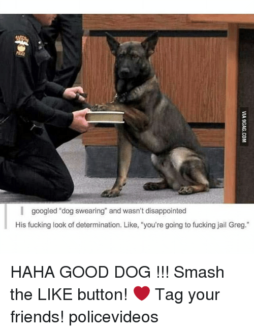 """Disappointed: I googled """"dog swearing"""" and wasn't disappointed  His fucking look of determination. Like, """"you're going to fucking jail Greg."""" HAHA GOOD DOG !!! Smash the LIKE button! ❤ Tag your friends! policevideos"""