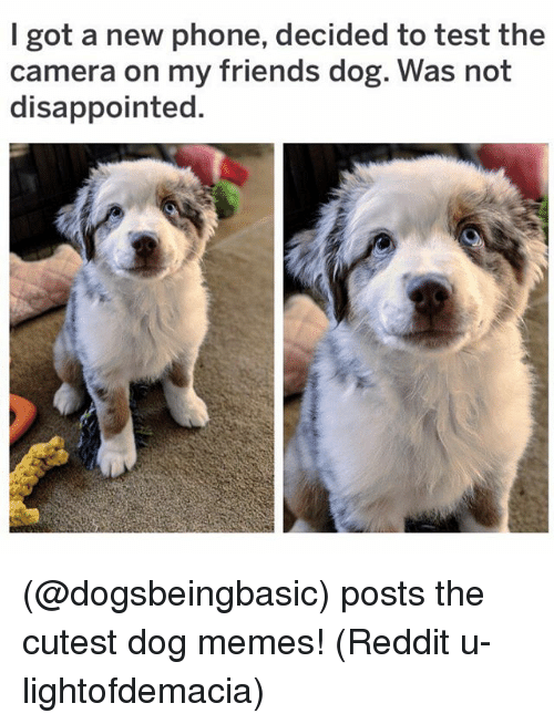 Disappointed, Friends, and Memes: I got a new phone, decided to test the  camera on my friends dog. Was not  disappointed. (@dogsbeingbasic) posts the cutest dog memes! (Reddit u-lightofdemacia)