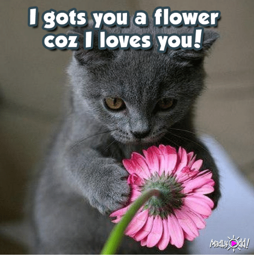 Love, Memes, and I Love You: I gots you a flower  coz I loves you