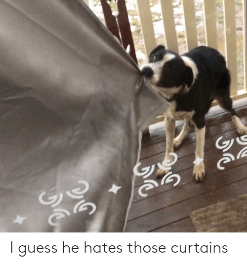 Curtains: I guess he hates those curtains