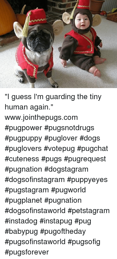 "Cute, Memes, and Guess: ""I guess I'm guarding the tiny human again."" ・・・ www.jointhepugs.com ・・・ #pugpower #pugsnotdrugs #pugpuppy #puglover #dogs #puglovers  #votepug #pugchat #cuteness #pugs #pugrequest #pugnation #dogstagram #dogsofinstagram #puppyeyes #pugstagram #pugworld #pugplanet #pugnation #dogsofinstaworld #petstagram #instadog #instapug #pug #babypug #pugoftheday #pugsofinstaworld #pugsofig #pugsforever"