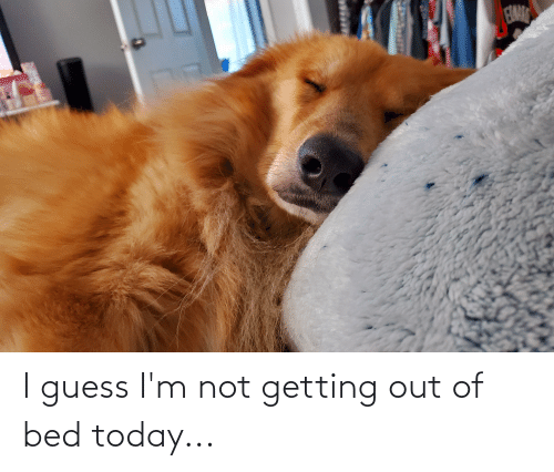 getting out of bed: I guess I'm not getting out of bed today...