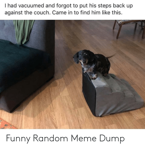 funny random: I had vacuumed and forgot to put his steps back up  against the couch. Came in to find him like this. Funny Random Meme Dump