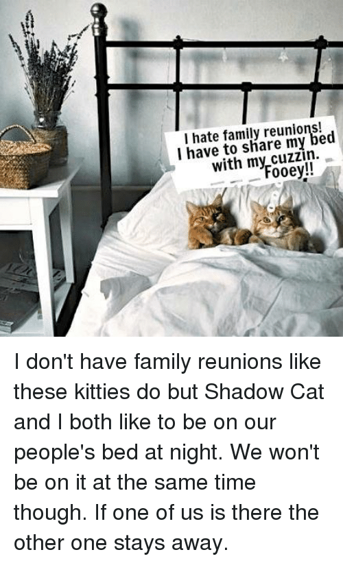 i hate family my bed i have to share my fooey i don 39 t have family reunions like these kitties do. Black Bedroom Furniture Sets. Home Design Ideas