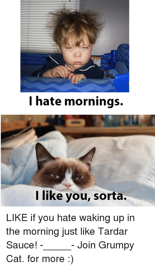 Tardar Sauce: I hate mornings.  like you, sorta. LIKE if you hate waking up in the morning just like Tardar Sauce! -_____- Join Grumpy Cat. for more :)