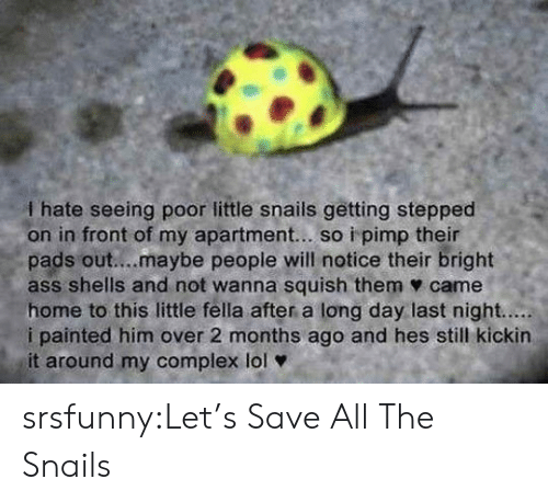 Pimp: I hate seeing poor little snails getting stepped  on in front of my apartment... so i pimp their  pads out....maybe people will notice their bright  ass shells and not wanna squish them ф came  home to this little fella after a long day last night.....  i painted him over 2 months ago and hes still kickin  it around my complex lol srsfunny:Let's Save All The Snails