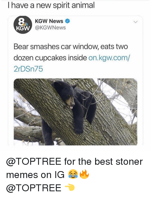 stoner: I have a new spirit animal  8  KGW  KGW News  @KGWNews  Bear smashes car window, eats two  dozen cupcakes inside on.kgw.com/  2rDSn75 @TOPTREE for the best stoner memes on IG 😂🔥 @TOPTREE 👈