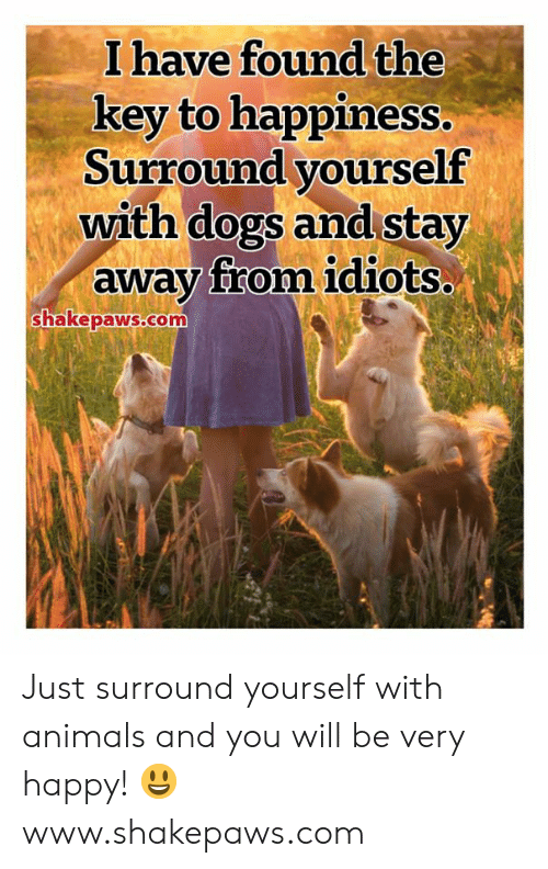 Key To: I have found the  key to happiness.  Surround yourself  with dogs and stay  away from idiots..  shakepaws.com Just surround yourself with animals and you will be very happy! 😃 www.shakepaws.com
