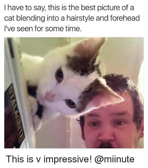 Best Pictures: I have to say, this is the best picture of a  cat blending into a hairstyle and forehead  I've seen for some time. This is v impressive! @miinute