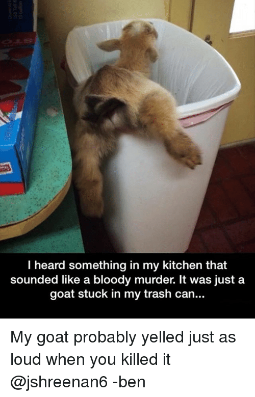 Memes, Trash, and Goat: I heard something in my kitchen that  sounded like a bloody murder. It was just a  goat stuck in my trash can... My goat probably yelled just as loud when you killed it @jshreenan6 -ben