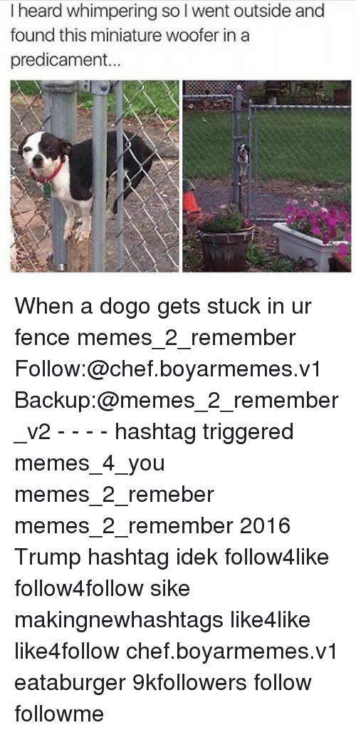 Trigger Meme: I heard whimpering so l went outside and  found this miniature woofer in a  and  predicament... When a dogo gets stuck in ur fence memes_2_remember Follow:@chef.boyarmemes.v1 Backup:@memes_2_remember_v2 - - - - hashtag triggered memes_4_you memes_2_remeber memes_2_remember 2016 Trump hashtag idek follow4like follow4follow sike makingnewhashtags like4like like4follow chef.boyarmemes.v1 eataburger 9kfollowers follow followme